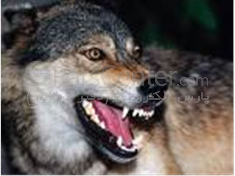 دور کننده سگ ، آموزش سگ ، دور کننده گرگ