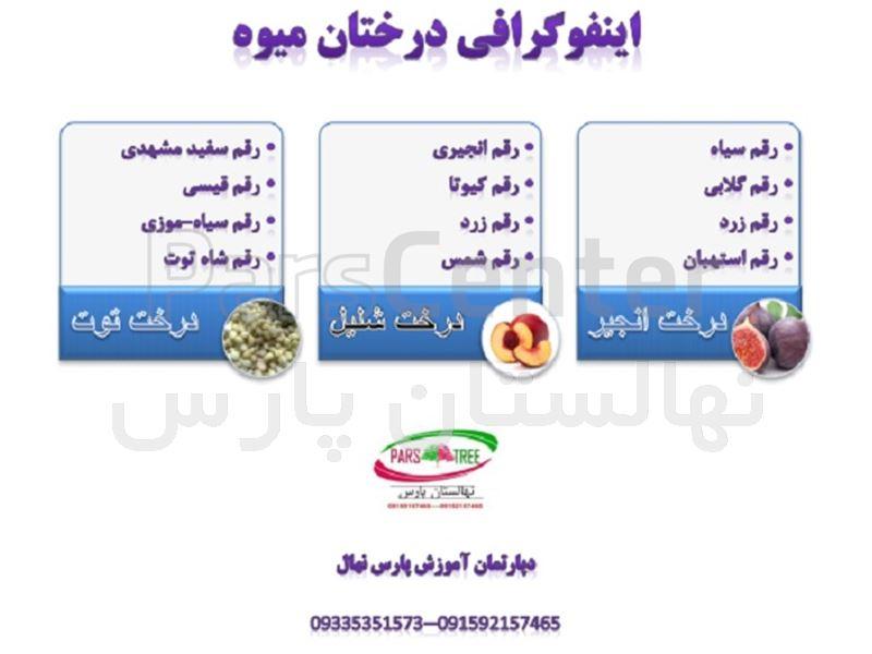 اینفوگرافی محصولات نهالستان پارس