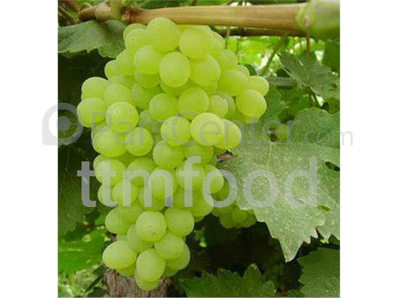کنسانتره انگور سفید TTMFOOD