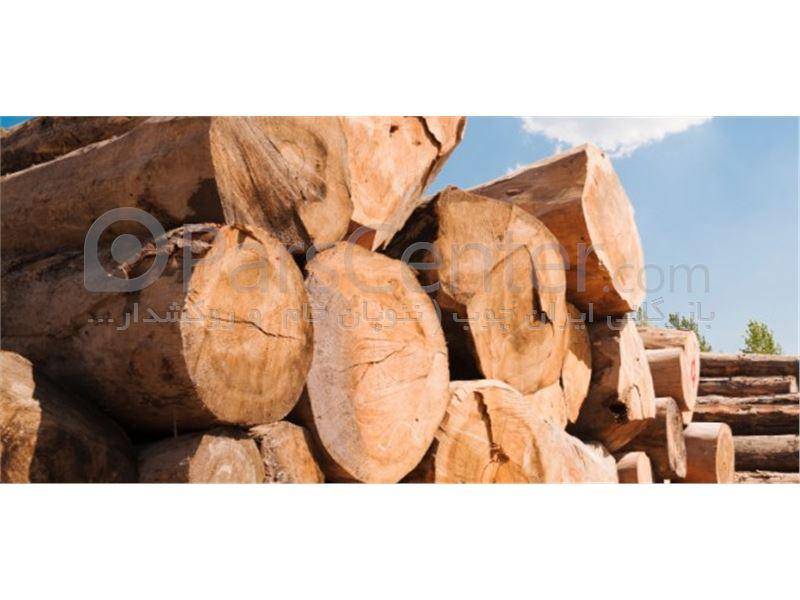چوب روسی ساسنا - محصولات الوار، چوب و تخته - سایر در پارس سنترچوب روسی ساسنا ...