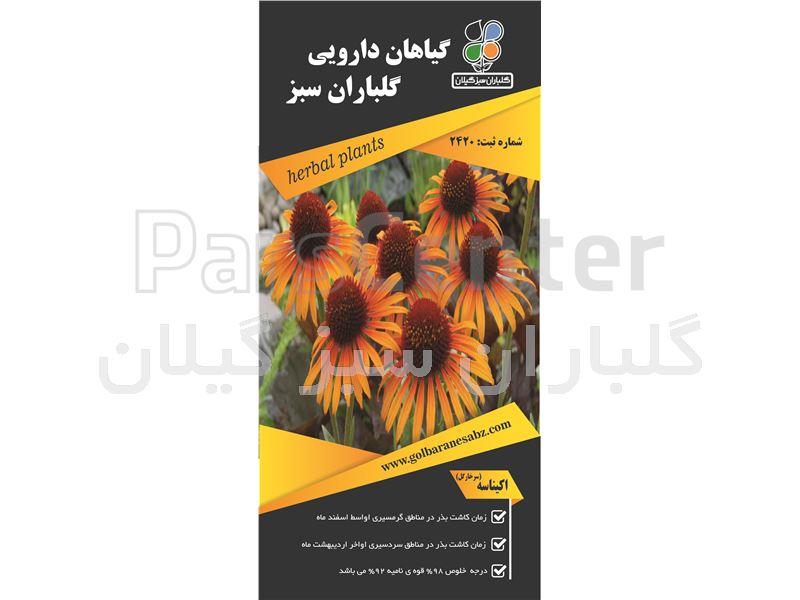 سرخارگل یا اکیناسه(Echinacea angustifolia)