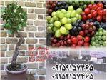 انگور ترکیبی،میوه های کمیاب