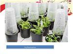 پذیرش سفارش کشت بافت گیاهان گرمسیری - سردسیر و زینتی