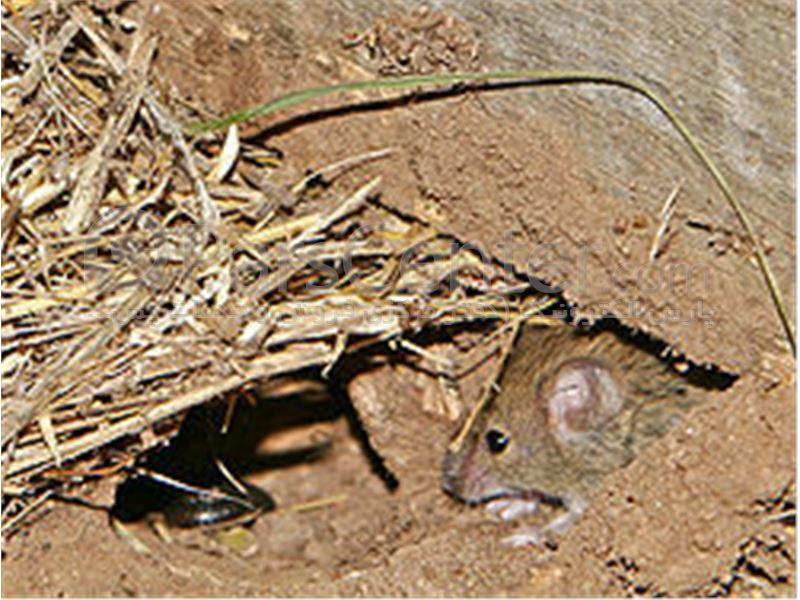 دستگاه دفع موش، دستگاه دفع کبوتر، دستگاه دفع پرنده ، دستگاه دفع آفات و حشرات موذی(مدلUAW927-M  )