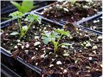 خاک مخصوص کاشت بذر /خاک برگ