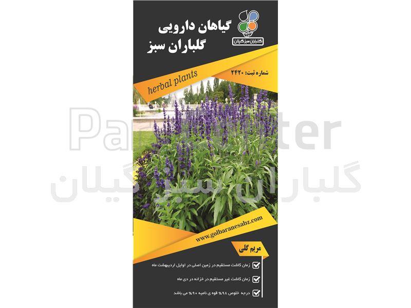 گیاه دارویی مریم گلی(Salvia officinalis)