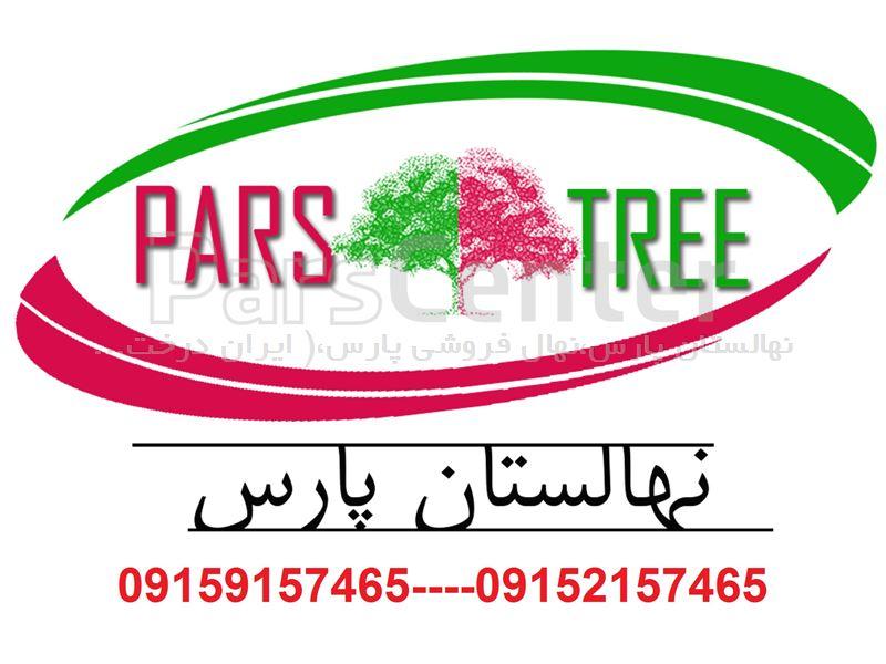 جابجایی درختان به روش روتبال#