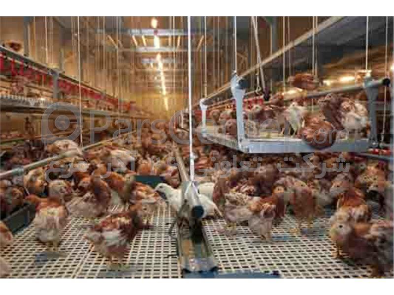 فروش-جوجه-یک-روزه-و-نیمچه-مرغ-محلی