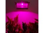 پروژکتور رشد گیاه ۳۰ وات