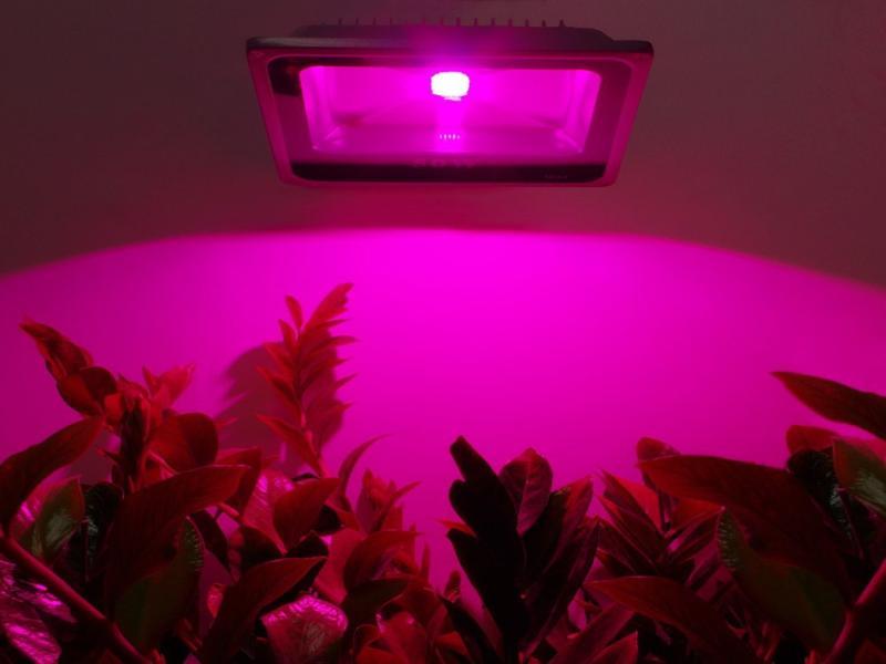 پروژکتور رشد گیاه ۱۰ وات