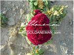 بذر گل هلندی