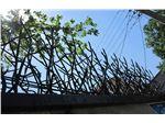 حفاظ شاخ گوزنی و حفاظ بوته ای