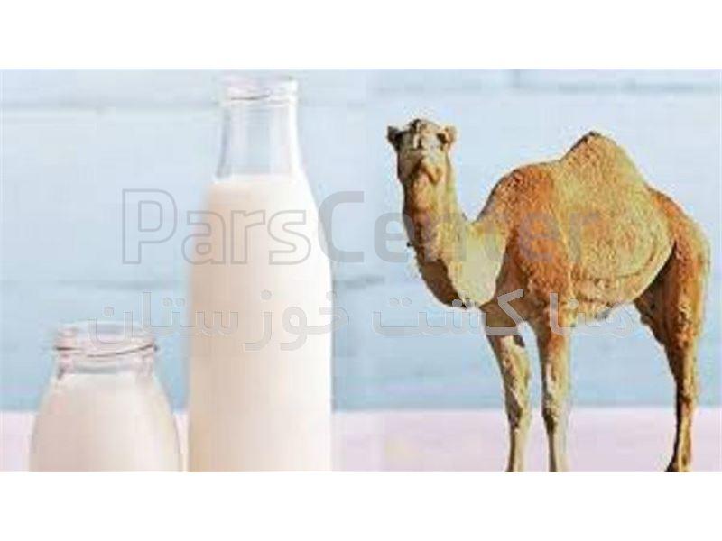 شیر شتر و دوغ شتر