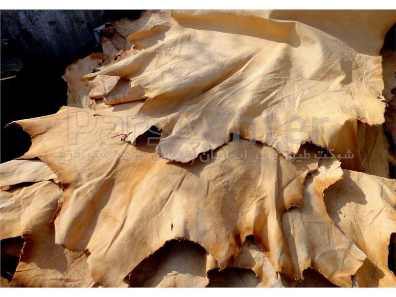 قیمت پوست خام شترمرغ