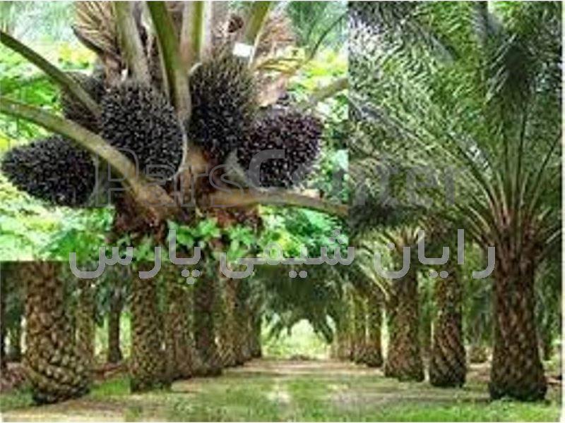 روغن پالم ، روغن پالم اصل مالزی