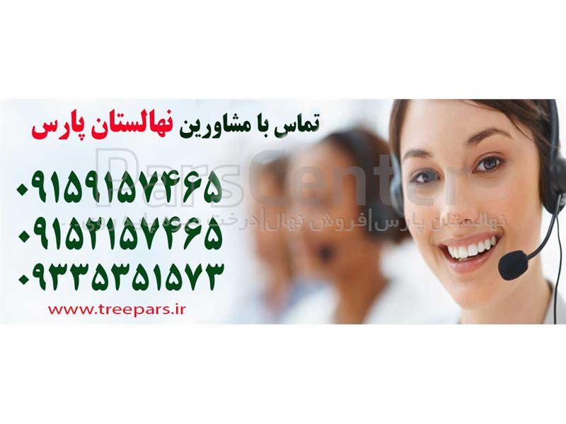 به-نهال به-درخت به-به اصفهان