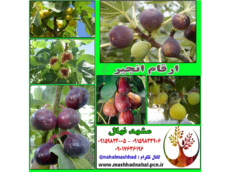Special and rare fruit seedlings