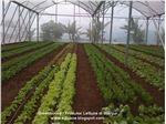 پوشش گلخانه سه لایه 8متری با یووی 3 درصد