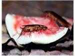 اهمیت پزشکی مبارزه با سوسک ها