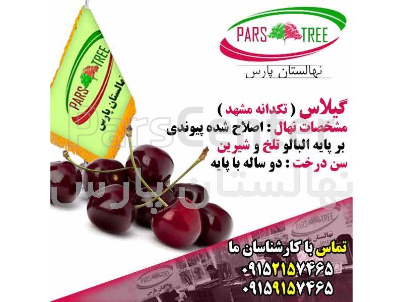ضوابط و دستورالعمل احداث نهالستان،تولیدنهال درختان میوه