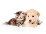دستگاه دور کننده سگ و گربه
