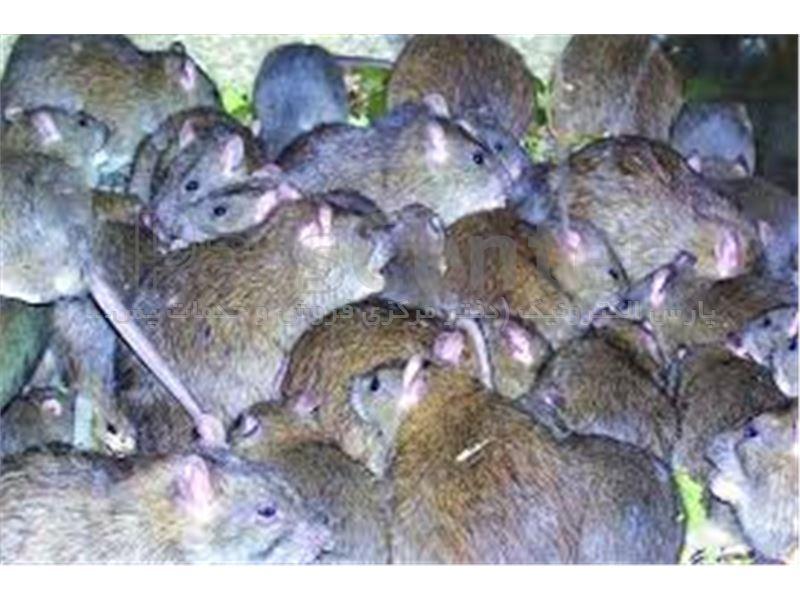دستگاه فراصوت دفع دائمی موش جایگزین سم موش