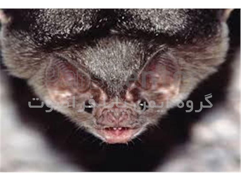 فراری دهنده و دور کننده خفاش تضمینی