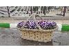 گلدان سبدی  مستطیلی و گرد فایبرگلاس