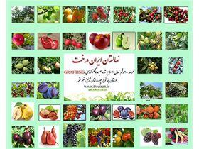 ایران درخت،نهالستان،نهال فروشی،