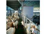دوره آموزشی تلقیح مصنوعی گوسفند و بز