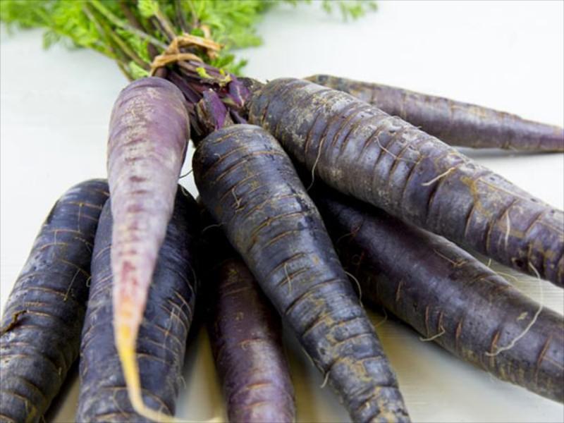 فروش کنسانتره هویج سیاه با کیفیت صادراتی