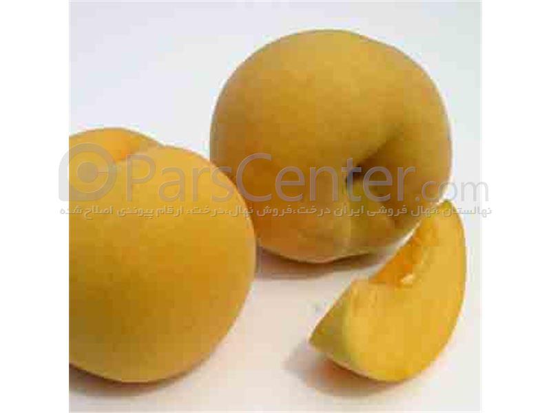 هلو گلدن _کوئین_هلو زعفرانی_Golden Queen peach