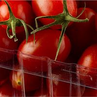 ظروف میوه
