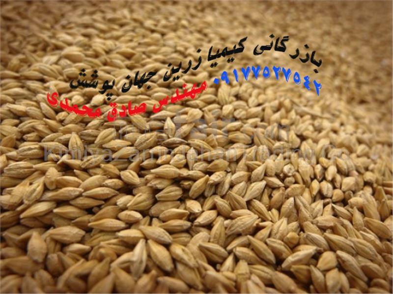 Russian barley