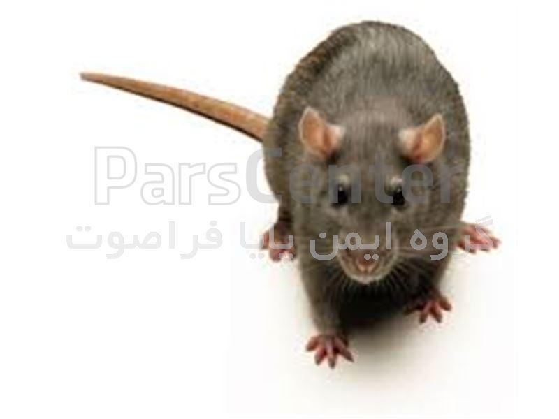چسب موش و از بین برنده موش